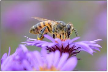 Pollinator Portraits